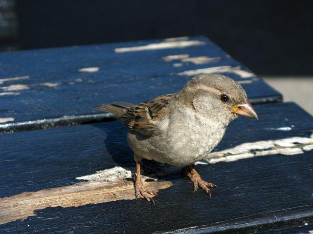 Anna-Sparrow-0661.jpg